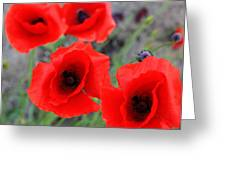 Poppies Of Stone Greeting Card by Jerry Cordeiro