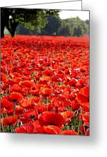 Poppies Greeting Card by Tammy Cantrell