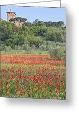 Poppy Field Greeting Card by Rob Tilley