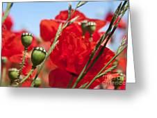 Poppy Pods Greeting Card by Jane Rix