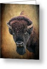 Portrait Of A Buffalo Greeting Card by Tamyra Ayles