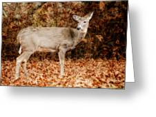 Portrait Of A Deer Greeting Card by Kathy Jennings