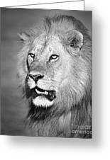 Portrait Of A Lion Greeting Card by Richard Garvey-Williams