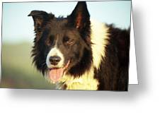 Portrait Of Indy Greeting Card by Michael Haslam