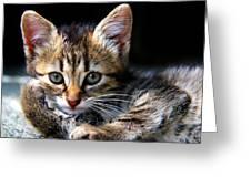 Posing Kitty Greeting Card by Joe Myeress