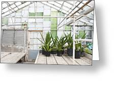 Potted Plants In A Greenhouse Greeting Card by Thom Gourley/Flatbread Images, LLC