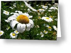 Prairie Daisies 1 Greeting Card by Griffin Harris