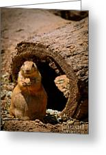Prairie Dog Dining Al Fresco Greeting Card by Shutter Happens Photography
