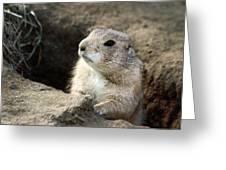 Prairie Dog Lookout Greeting Card by Karol  Livote