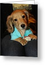 Precious Puppy Greeting Card by Diana Haronis