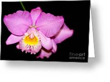 Pretty In Pink Orchid Greeting Card by Sabrina L Ryan