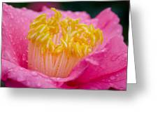 Pretty In Pink Greeting Card by Rich Franco