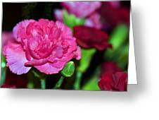 Pretty In Pink Greeting Card by Sandi OReilly