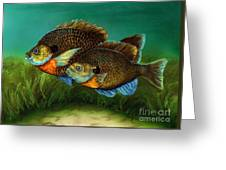 Pretty Little Panfish Greeting Card by Kathleen Kelly Thompson