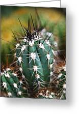 Prickly Greeting Card by Leslie Leda