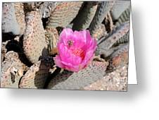 Prickly Pear Cactus Fertilized By Honey Bee Greeting Card by Gary Whitton