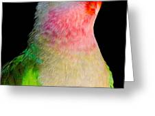 PRINCESS PARROT Polytelis alexandrae Western Australia Greeting Card by Andy Smy