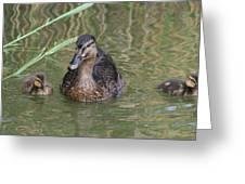 Proud Mom Duck Greeting Card by Valia Bradshaw
