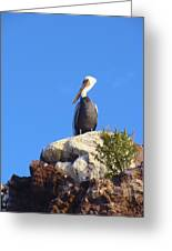 Proud Pelican Greeting Card by Ramie Liddle