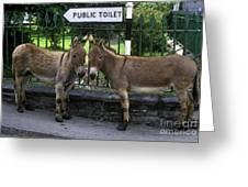 Public Toilet Greeting Card by John Greim