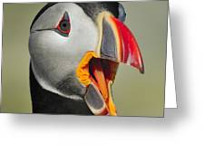 Puffin Portrait Greeting Card by Tony Beck
