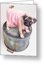 Pug Puppy Pink Sun Dress Greeting Card by Edward Fielding