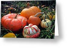 Pumpkin Patch Greeting Card by Kathy Yates
