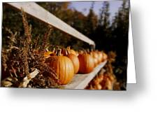Pumpkins Aglow Greeting Card by Christine Tuck