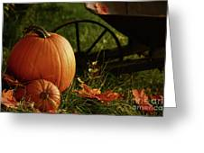Pumpkins In The Grass Greeting Card by Sandra Cunningham