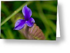 Purple Bromeliad Flower Greeting Card by Douglas Barnard