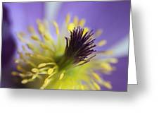 Purple Flower Center Greeting Card by Mark J Seefeldt