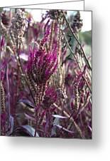 Purple Haze Greeting Card by Bill Cannon
