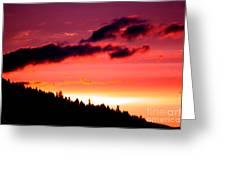 Purple Haze Greeting Card by Nick Gustafson