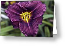 Purple Lilly Greeting Card by Jim Chamberlain