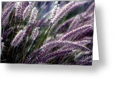 Purple Ornamental Fall Grass Greeting Card by Marjorie Imbeau