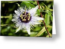 Purple Passionflower Greeting Card by April Wietrecki Green