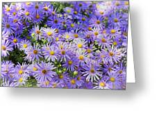 Purple Reigns Greeting Card by Joan Carroll