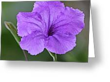 Purple Ruellia Greeting Card by Becky Lodes