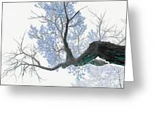 Purple Tree 1 Greeting Card by Rebecca Margraf