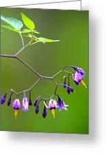 Purple Wild Flowers Greeting Card by Trevor Slauenwhite