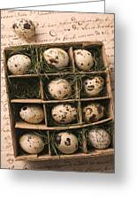 Quail Eggs In Box Greeting Card by Garry Gay