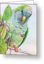 Quaker Greeting Card by Norma Gafford