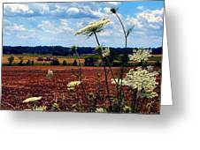 Queen Annes Lace And Hay Bales Greeting Card by Julie Dant