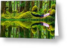 Queen Charlotte Island Swamp Greeting Card by David Nunuk