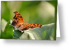 Question Mark Butterfly Greeting Card by JD Grimes