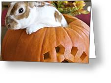 Rabbit Joins the Harvest Greeting Card by Alanna DPhoto
