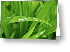 Rain Drops On Grass Greeting Card by Trever Miller