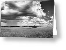 Rain Everglades Greeting Card by Bruce Bain