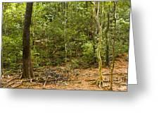Rain Forest Greeting Card by John Buxton