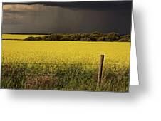 Rain Front Approaching Saskatchewan Canola Crop Greeting Card by Mark Duffy